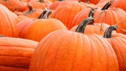 heaviest-pumpkin-mike-schmit