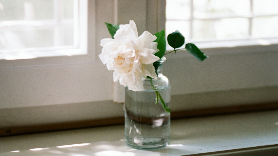 fresh rose in jar on windowsill
