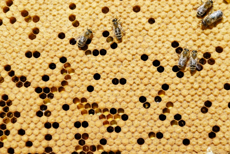 bees and beekeeping for honey