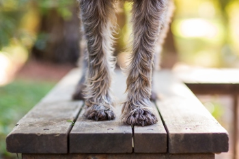 dog paws on a bench