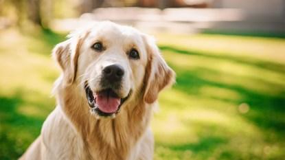 Pet health cures mag thumbnail