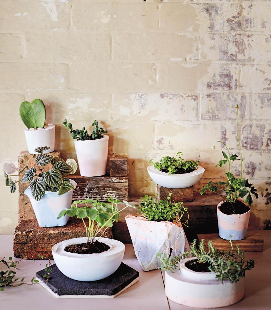 planter 1