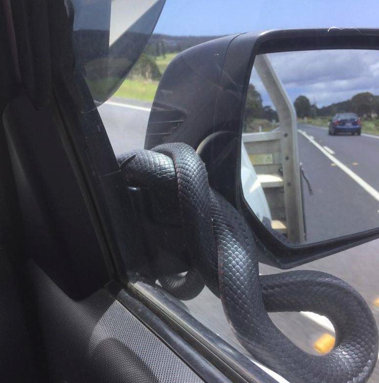 snake on car 2