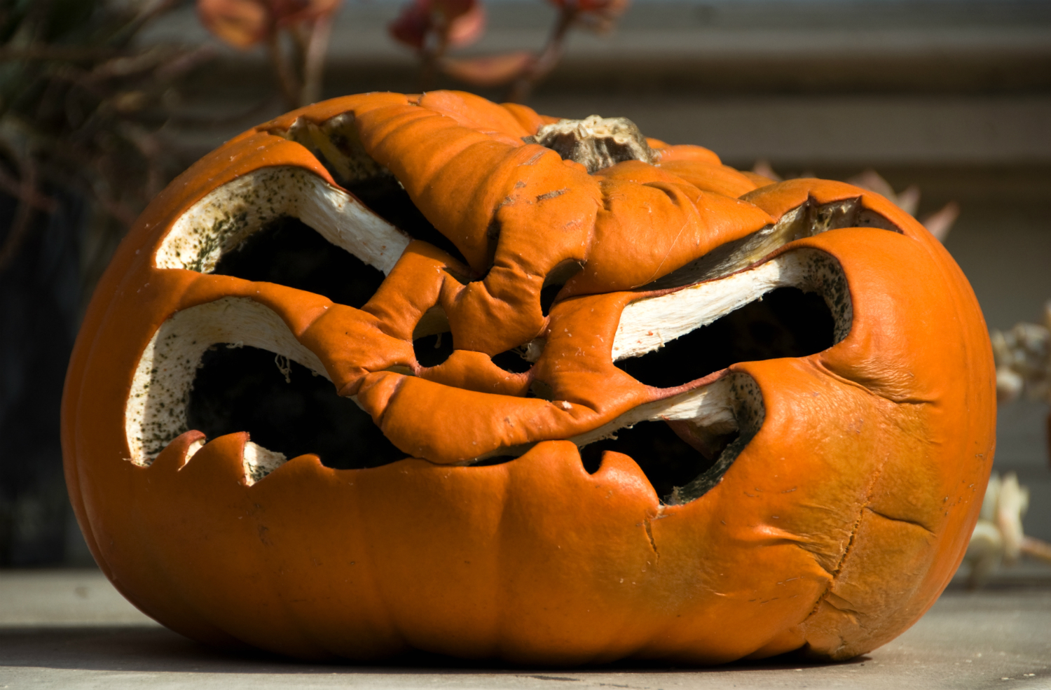 why do pumpkins rot getty