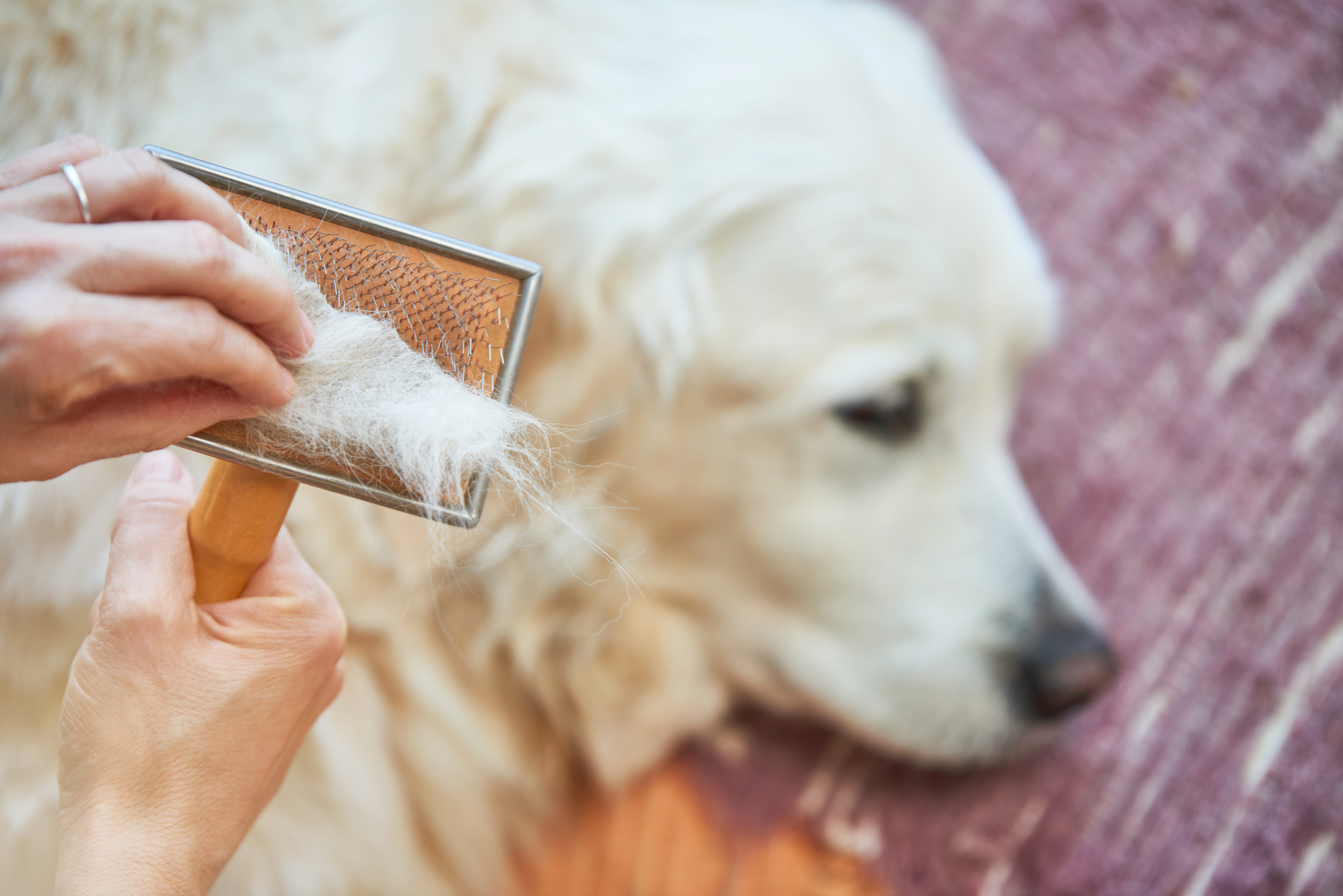 Lint rollers aren't the only way to remove pet hair from clothes!