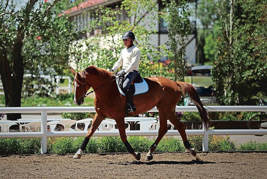 Steve Bond Horseback