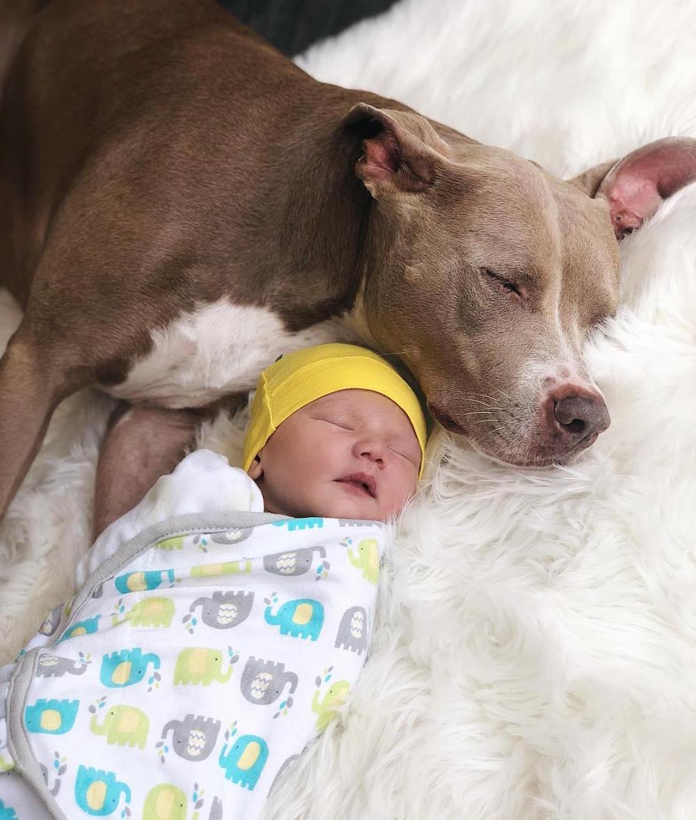 Jacqueline MacInness Wood son Rise dog Ja'mie